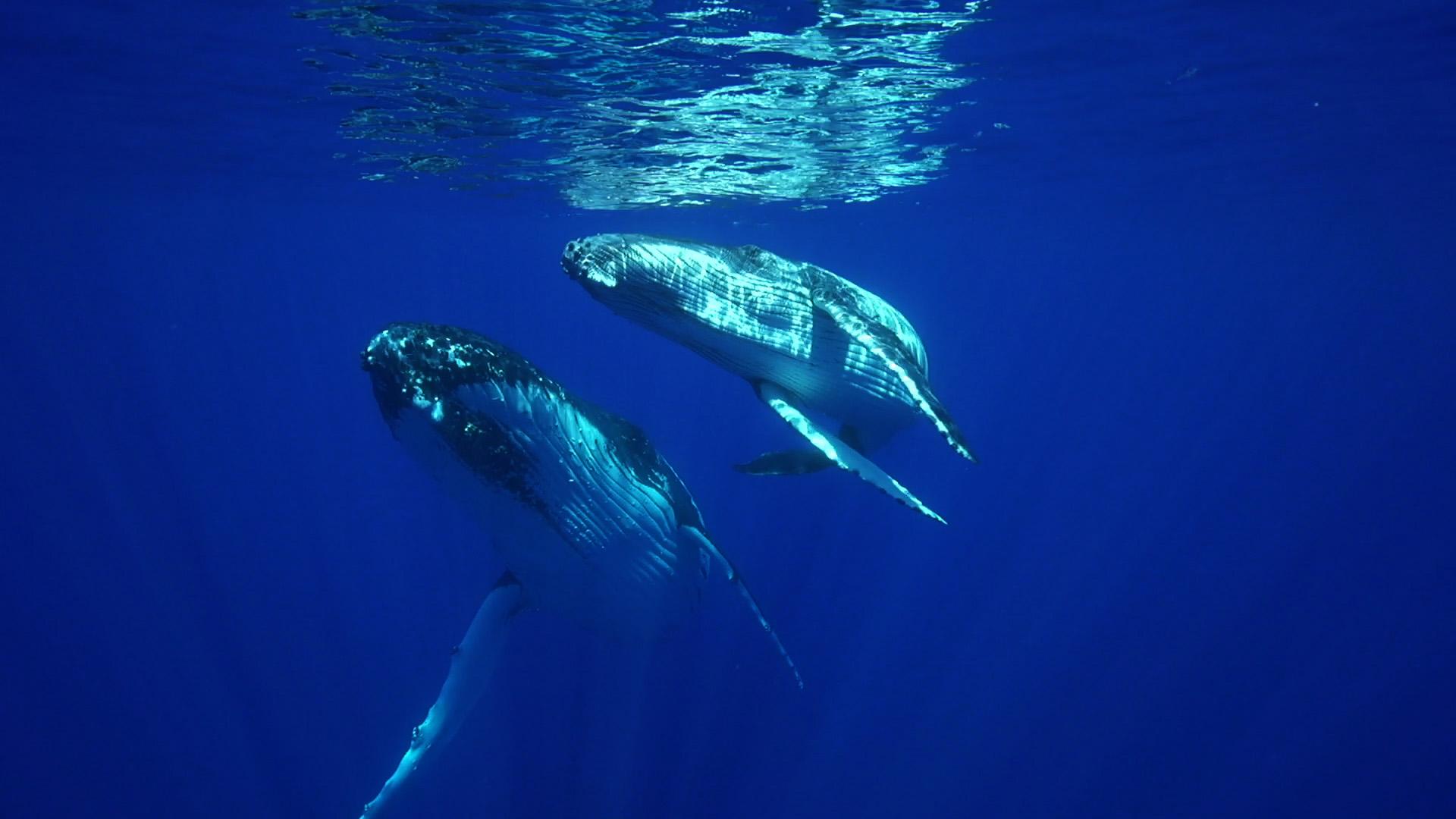 the-origins-ballenas